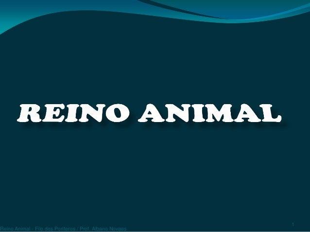 Reino Animal - Filo dos Poríferos / Prof. Albano Novaes 1