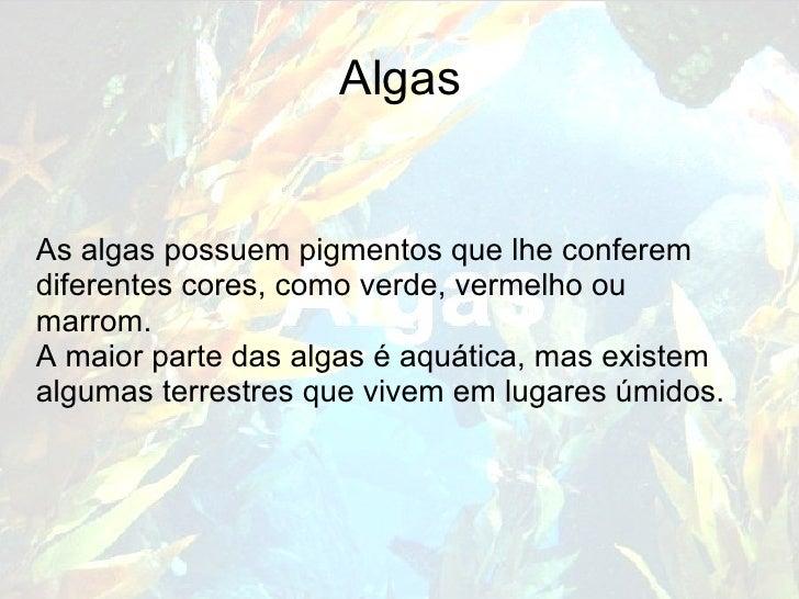 Algas As algas possuem pigmentos que lhe conferem diferentes cores, como verde, vermelho ou marrom. A maior parte das alga...