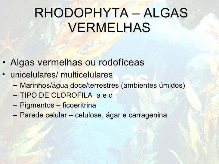 RHODOPHYTA – ALGAS VERMELHAS <ul><li>Algas vermelhas ou rodofíceas </li></ul><ul><li>unicelulares/ multicelulares </li></u...