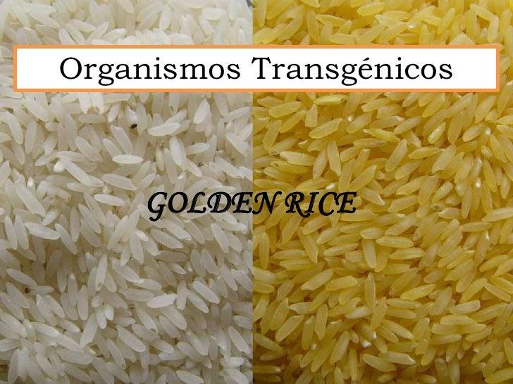 Organismos Transgénicos    GOLDEN RICE