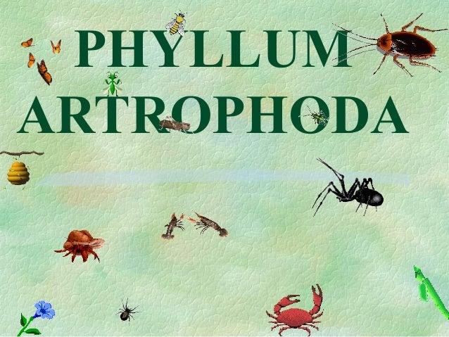 PHYLLUM  ARTROPHODA