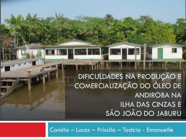 DIFICULDADES NA PRODUÇÃO E COMERCIALIZAÇÃO DO ÓLEO DE ANDIROBA NA ILHA DAS CINZAS E SÃO JOÃO DO JABURU Camila – Lucas – Pr...