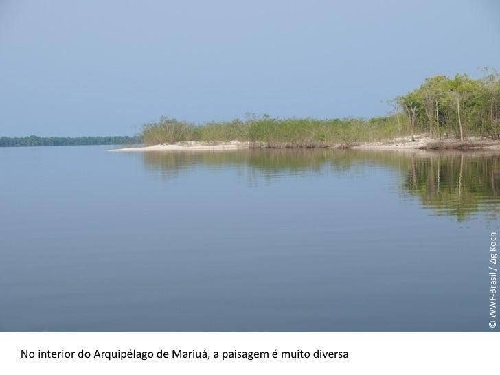 © WWF-Brasil / Zig Koch No interior do Arquipélago de Mariuá, a paisagem é muito diversa