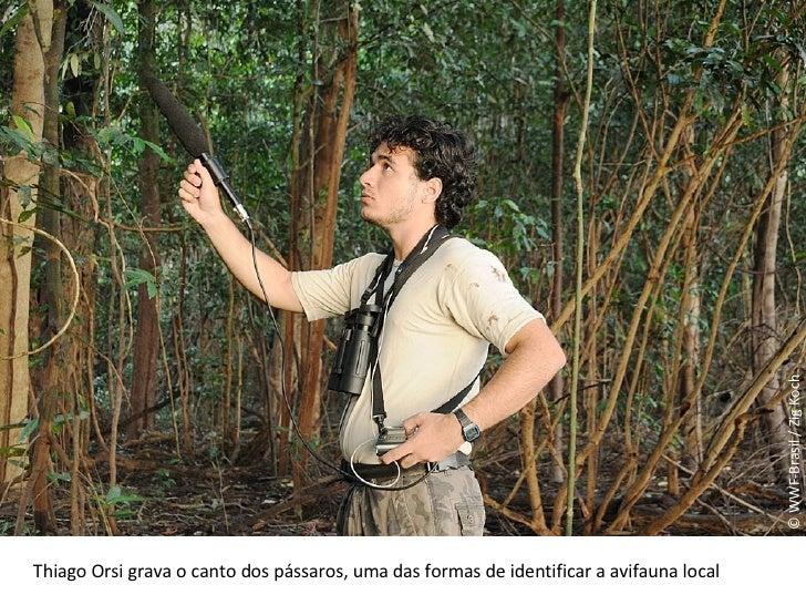 © WWF-Brasil / Zig Koch Thiago Orsi grava o canto dos pássaros, uma das formas de identificar a avifauna local