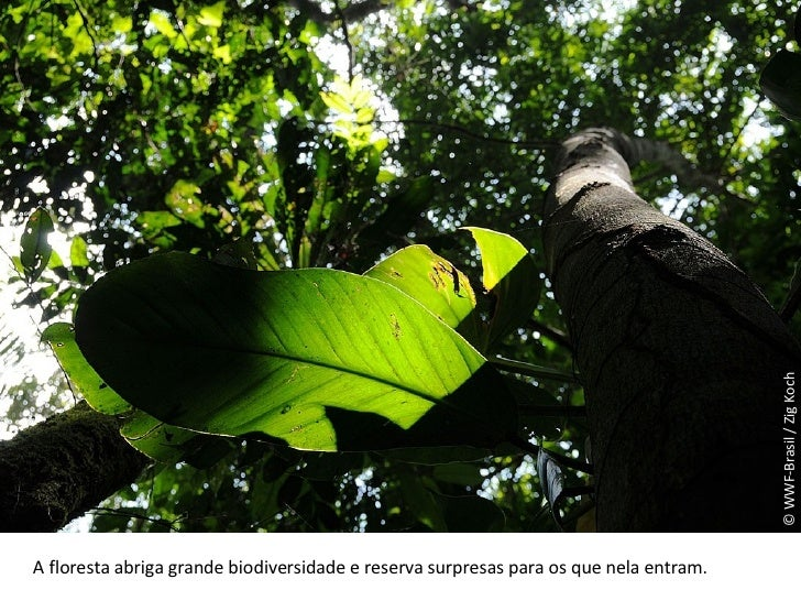 © WWF-Brasil / Zig Koch A floresta abriga grande biodiversidade e reserva surpresas para os que nela entram.