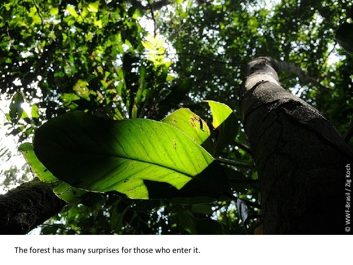 © WWF-Brasil / Zig Koch The forest has many surprises for those who enter it.