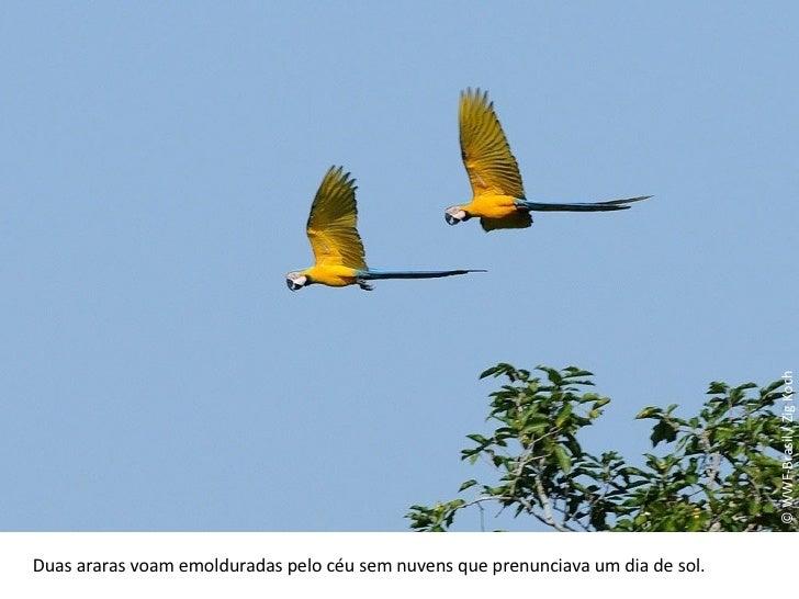 © WWF-Brasil / Zig Koch Duas araras voam emolduradas pelo céu sem nuvens que prenunciava um dia de sol.
