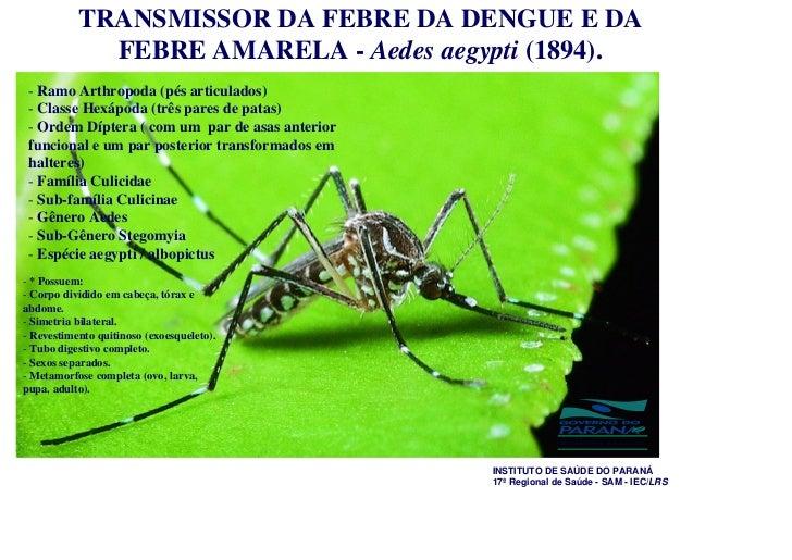 TRANSMISSOR DA FEBRE DA DENGUE E DA             FEBRE AMARELA - Aedes aegypti (1894). - Ramo Arthropoda (pés articulados) ...