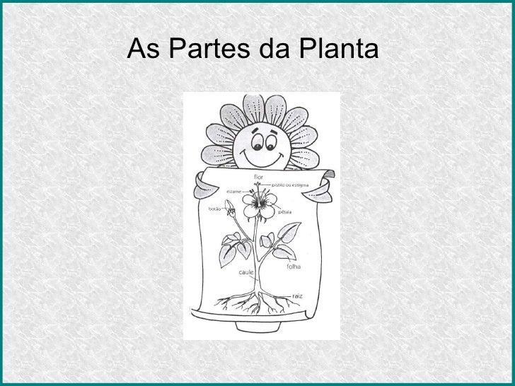As Partes da Planta