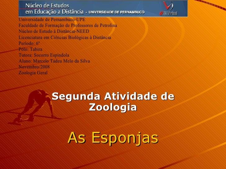 Segunda Atividade de Zoologia As Esponjas