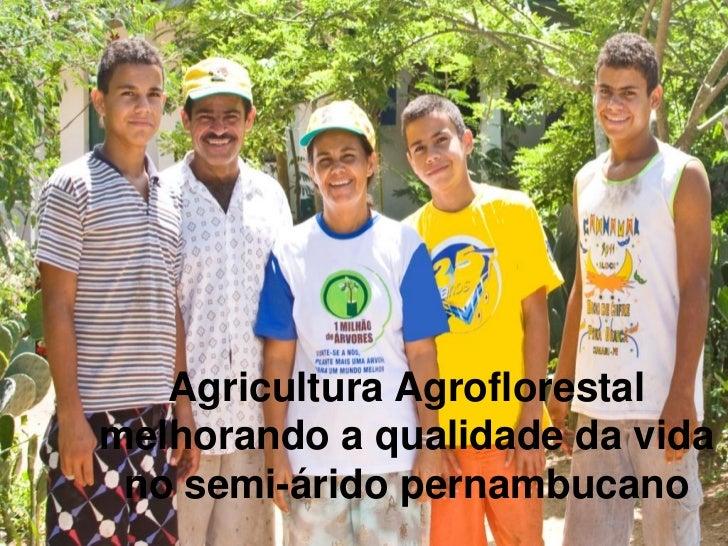 Agricultura Agroflorestalmelhorando a qualidade da vida no semi-árido pernambucano