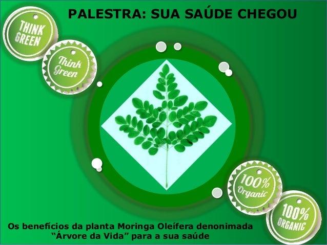 """PALESTRA: SUA SAÚDE CHEGOU Os benefícios da planta Moringa Oleífera denonimada """"Árvore da Vida"""" para a sua saúde"""
