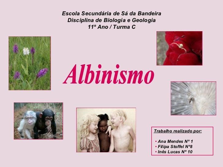 Albinismo Escola Secundária de Sá da Bandeira Disciplina de Biologia e Geologia 11º Ano / Turma C Trabalho realizado por: ...