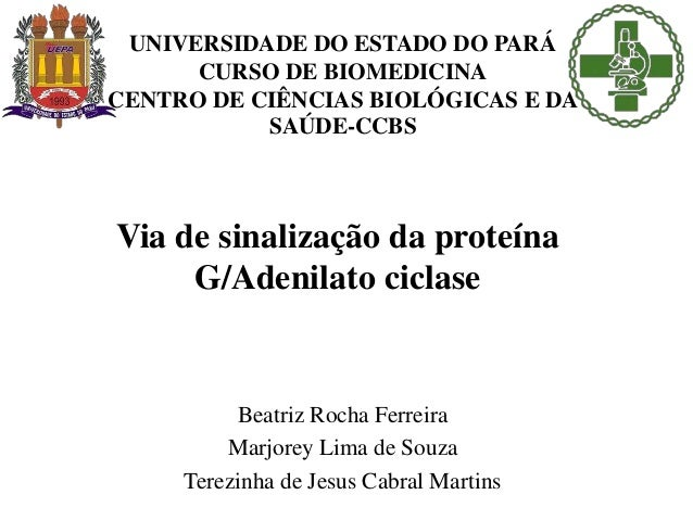 UNIVERSIDADE DO ESTADO DO PARÁ CURSO DE BIOMEDICINA CENTRO DE CIÊNCIAS BIOLÓGICAS E DA SAÚDE-CCBS Beatriz Rocha Ferreira M...