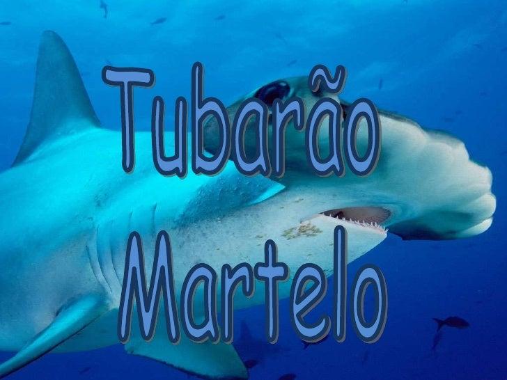 Tubarão <br />Martelo<br />