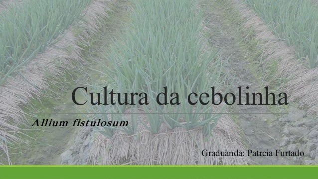 Cultura da cebolinha  Allium fistulosum  Graduanda: Patrcia Furtado