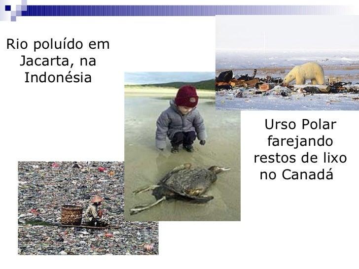 Rio poluído em Jacarta, na Indonésia Urso Polar farejando restos de lixo no Canadá