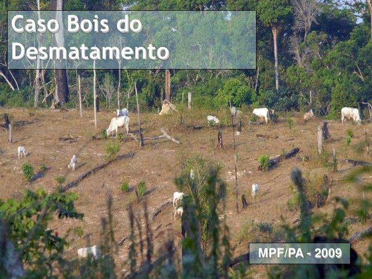 Caso Pecuária na Amazônia Caso Bois do Proposta de Termo de Ajuste de Conduta   Desmatamento                              ...