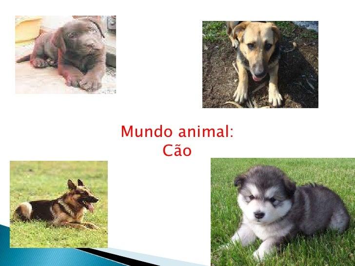 Mundo Animal: cão