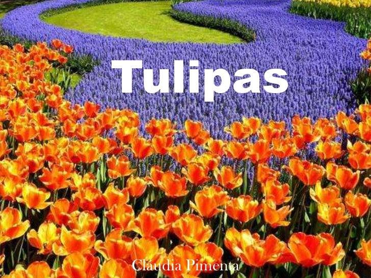 Tulipas<br />1<br />Cláudia Pimenta<br />