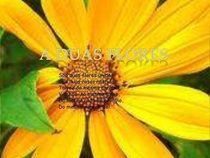 A duas flores<br />São duas flores unidasSão duas rosas nascidasTalvez do mesmo arrebol,Vivendo, no mesmo galho,Da mesma g...