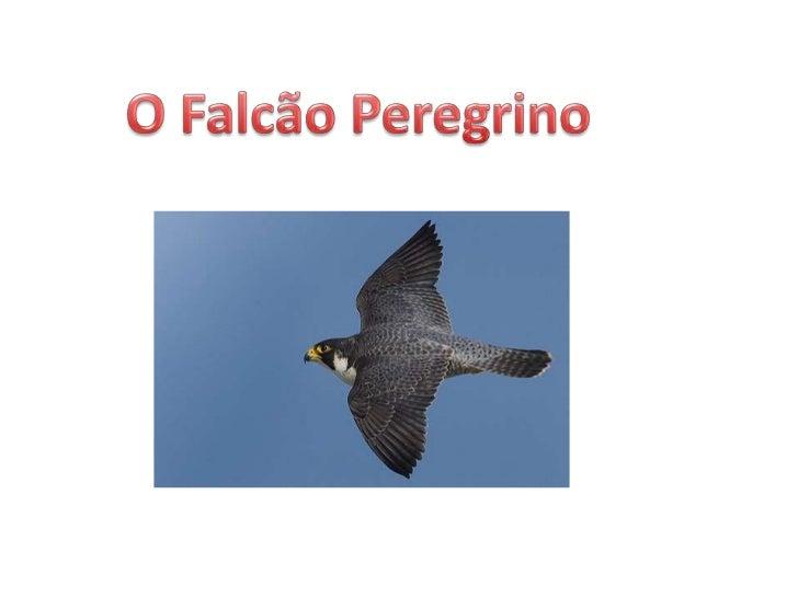 O Falcão Peregrino<br />