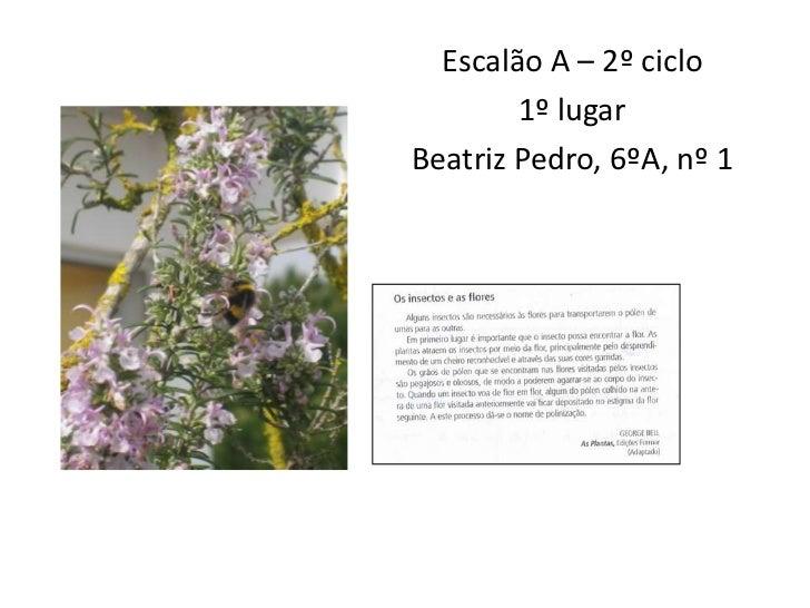 Escalão A – 2º ciclo<br />1º lugar<br />Beatriz Pedro, 6ºA, nº 1<br />
