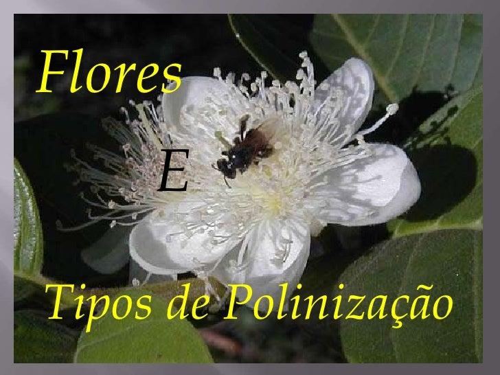 Flores     ETipos de Polinização