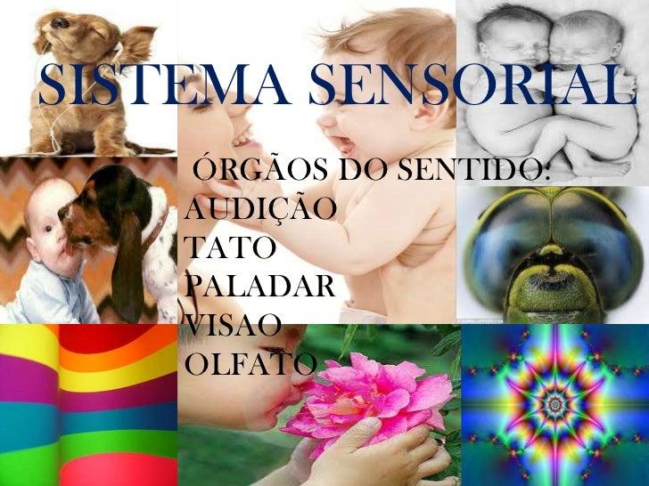 SISTEMA SENSORIAL    ÓRGÃOS DO SENTIDO:    AUDIÇÃO    TATO    PALADAR    VISAO    OLFATO
