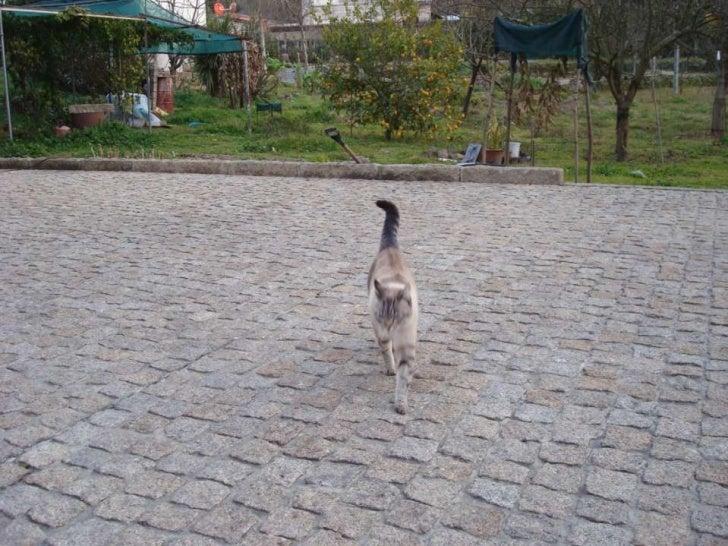 Eu sou a Kitty,