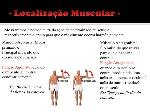 Músculos Sinergistas:                     Músculos Fixadores:Fixa articulações distantes para que o    Fixa a origem do ag...