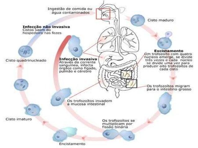 • Carlos Justiniano Ribeiro Chagas • Brasileiro • Descobridor da Doença de Chagas • Estudos sobre a Malaria