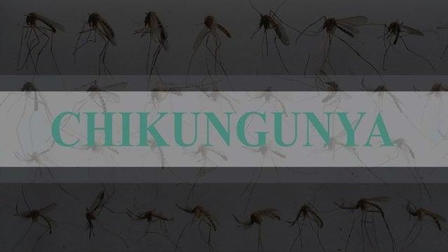A febre chikungunya, ou  simplesmente chicungunha, é uma doença  viral transmitida por mosquitos. Foi descrita  pela prime...