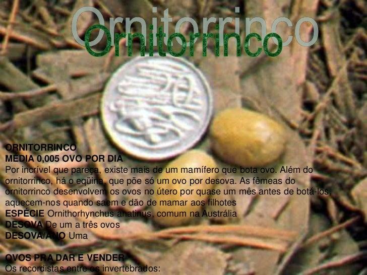 ORNITORRINCOMÉDIA 0,005 OVO POR DIAPor incrível que pareça, existe mais de um mamífero que bota ovo. Além doornitorrinco, ...
