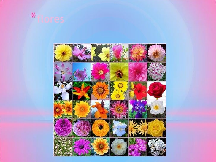 *flores