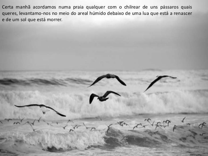 Certa manhã acordamos numa praia qualquer com o chilrear de uns pássaros quaisqueres, levantamo-nos no meio do areal húmid...