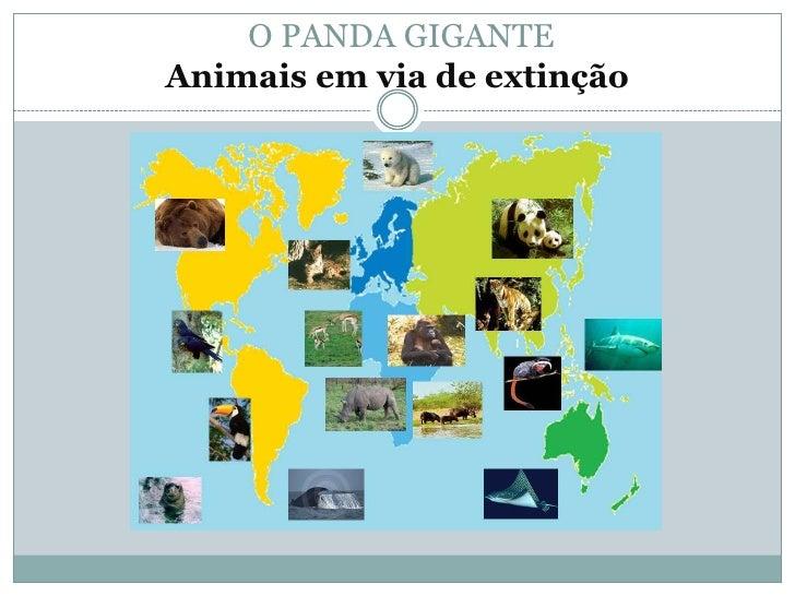 O PANDA GIGANTEAnimais em via de extinção