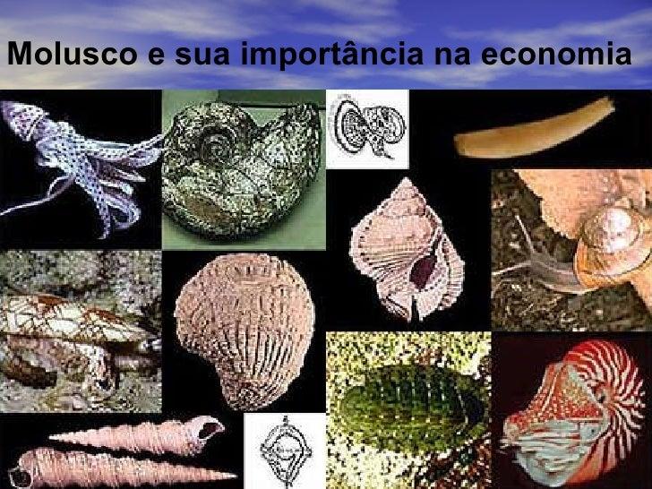 Molusco e sua importância na economia