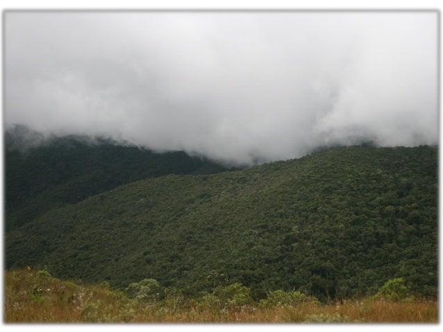 Papel ecológico da neblina e a absorção foliar de água em três espécies lenhosas de Matas Nebulares, SP - Brasil Slide 2