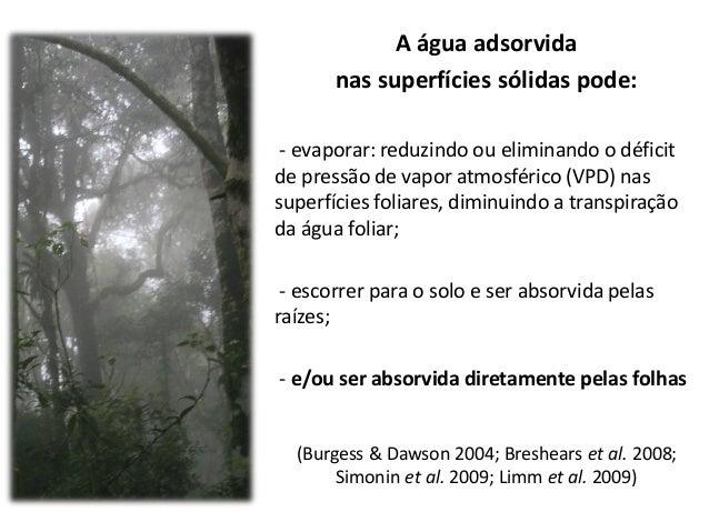 Papel ecológico da neblina e a absorção foliar de água em três espécies lenhosas de Matas Nebulares, SP - Brasil Slide 3