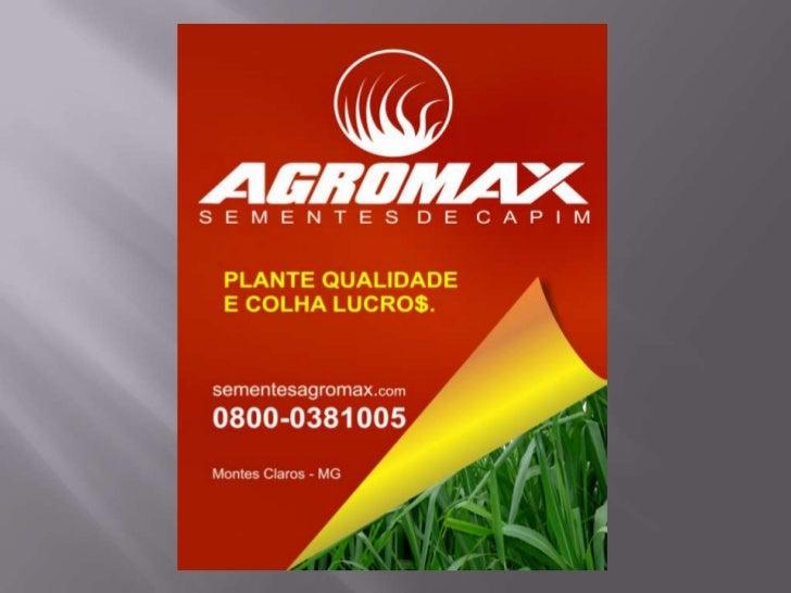 Telefone de contato:(38)3231-10050800-0381005E-mail:vendas@sementesagromax.com.brMsn:sementesagromax@hotmail.comSkype:seme...