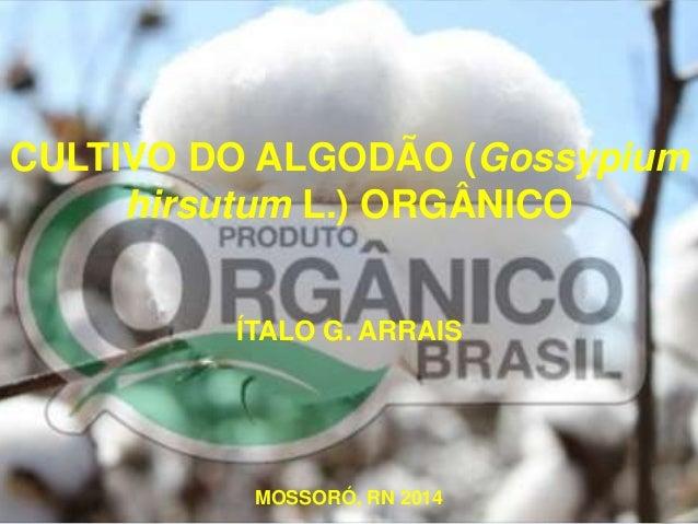 CULTIVO DO ALGODÃO (Gossypium  hirsutum L.) ORGÂNICO  ÍTALO G. ARRAIS  MOSSORÓ, RN 2014