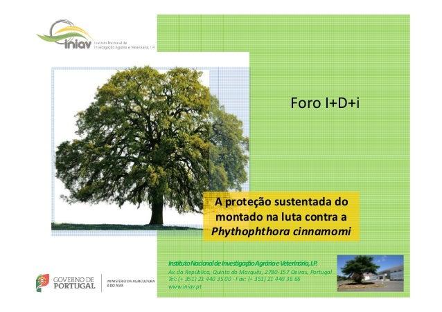 esea Foro I+D+i A proteção sustentada do montado na luta contra a Phythophthora cinnamomi InstitutoNacionaldeInvestigaçãoA...