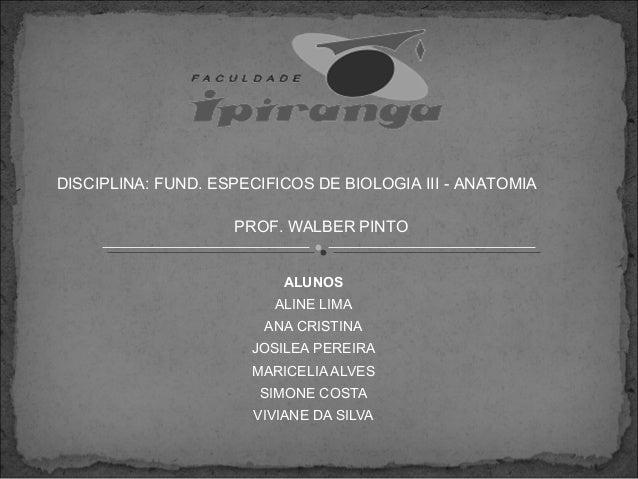 DISCIPLINA: FUND. ESPECIFICOS DE BIOLOGIA III - ANATOMIA PROF. WALBER PINTO ALUNOS ALINE LIMA ANA CRISTINA JOSILEA PEREIRA...