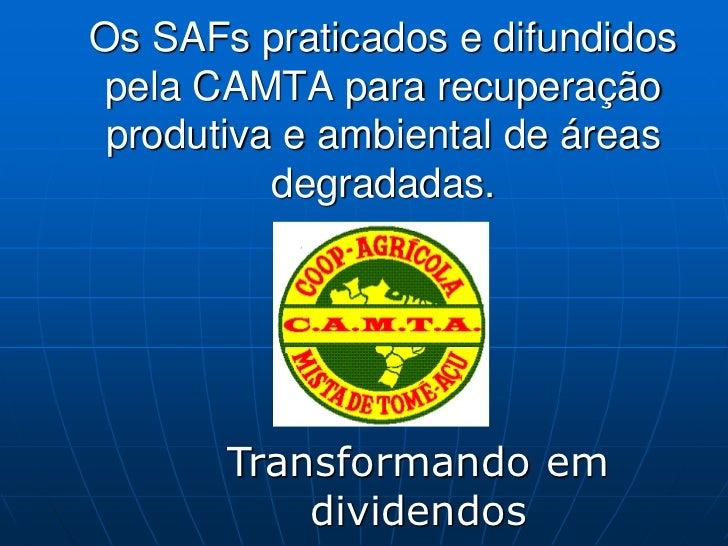 Os SAFs praticados e difundidos pela CAMTA para recuperação produtiva e ambiental de áreas          degradadas.       Tran...