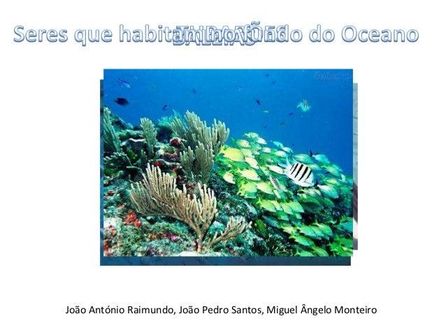 João António Raimundo, João Pedro Santos, Miguel Ângelo Monteiro