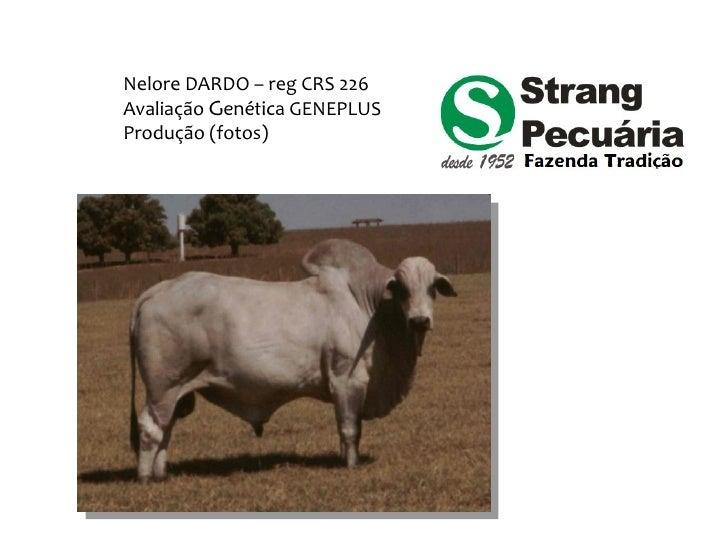 Nelore DARDO – reg CRS 226 Avaliação Genética GENEPLUS Produção (fotos)