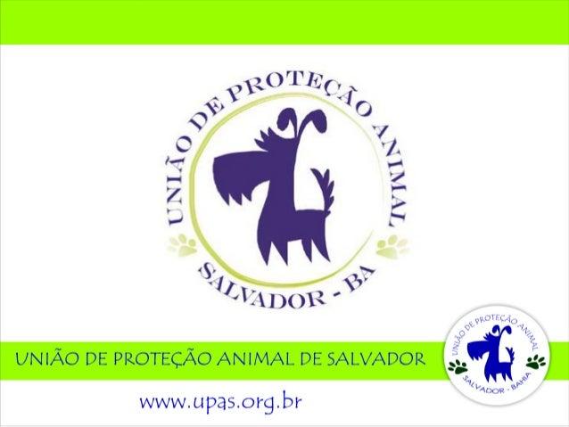 A UPAS, União de Proteção Animal de Salvador, é uma entidade semfins lucrativos, fundada em 2008, por um grupo de protetor...