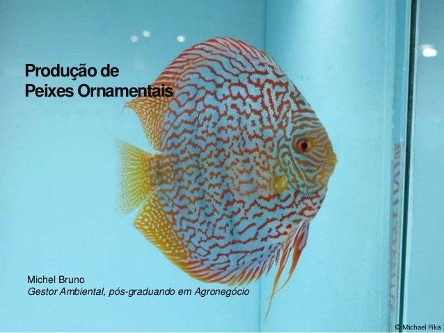 © Michael Pikis  Produção de  Peixes Ornamentais  Michel Bruno  Gestor Ambiental, pós-graduando em Agronegócio