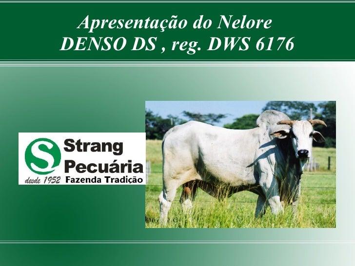Apresentação do Nelore DENSO DS , reg. DWS 6176